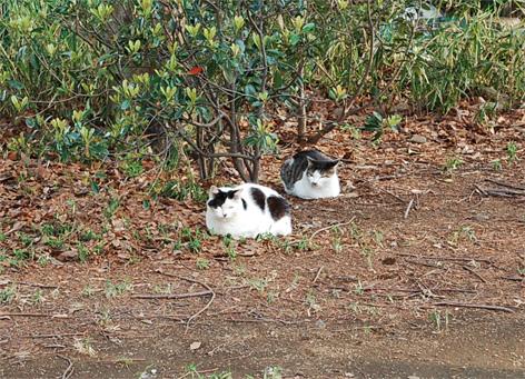 Cat_at_todoroki