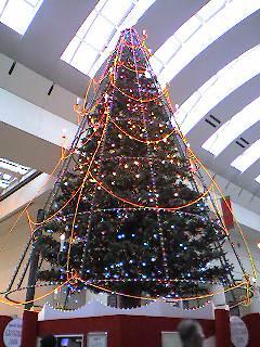 singing_tree2005
